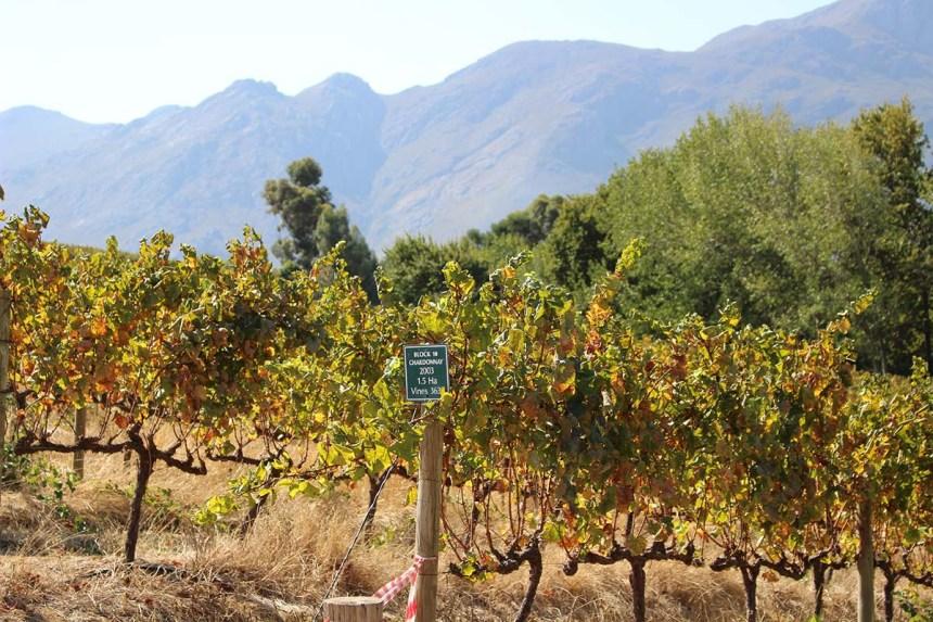 南アフリカのワイン