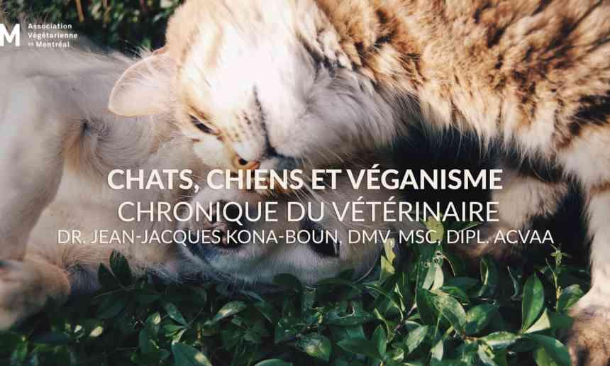 L'alimentation végétalienne pour le chien et le chat : un dilemme végane