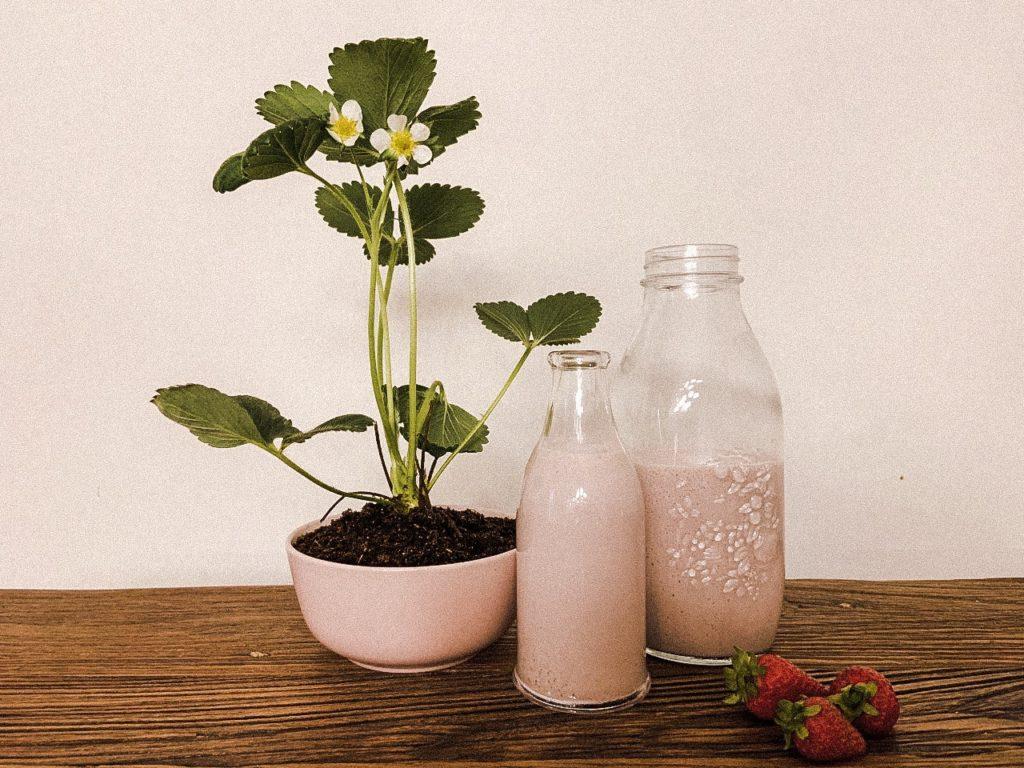 Boisson végétale à la fraise style « YOP »