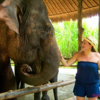 Animal encounters in Bali