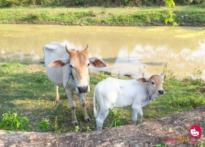 A friendly homestay in rural Cambodia