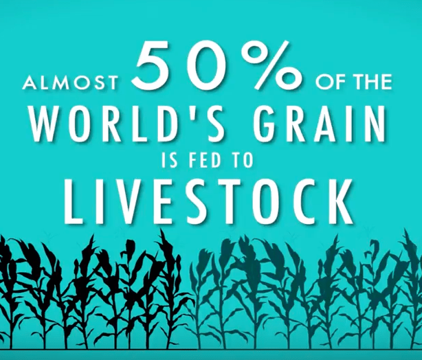 Statistic: 50% of world's grain fed to livestock.