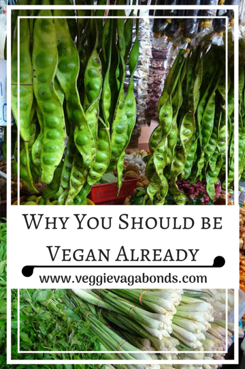 Why You Should be Vegan Already