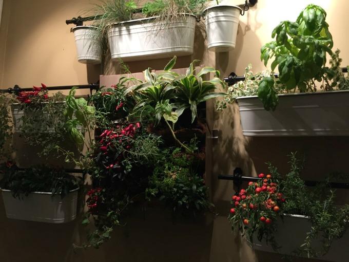 herbs-on-walls