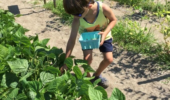 10 Foodie Activities for Kids in Summer