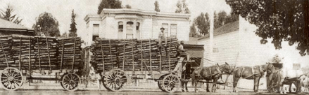 Transporting the tanoak bark by wagon