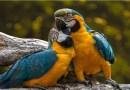 Índia proibe encarceramento de pássaros