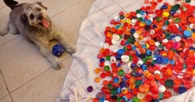 Projeto Rio Eco Pets recolhe tampas plásticas em favor da causa animal