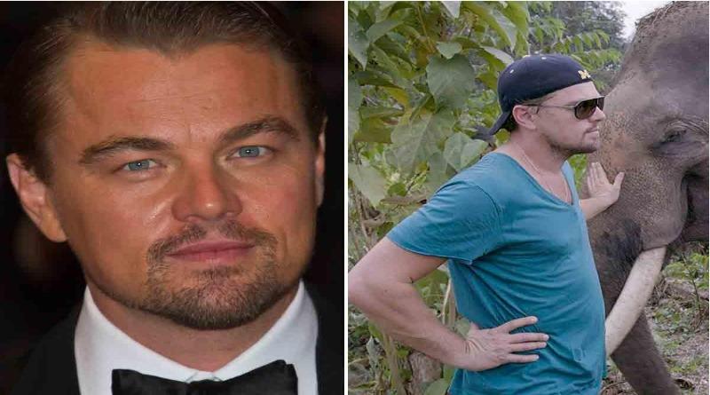 Leonardo DiCaprio doou mais de US$ 100 milhões para acabar com a caça