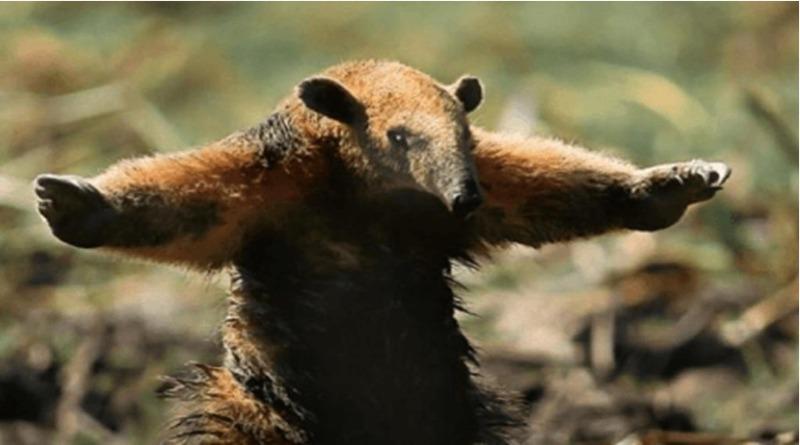 Fotógrafo capta foto chocante de tamanduá fugindo do fogo na Amazônia