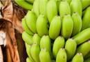 Conheça 5 maneiras de ter benefícios ao comer bananas verdes
