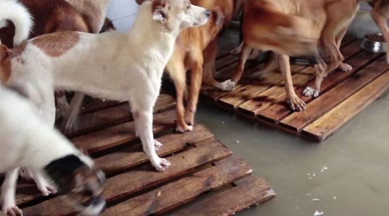 Forte chuva inunda abrigo de animais na Zona Oeste do Rio de Janeiro