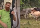 """Fazendeiro abate vacas com fuzil por achar  mais humano"""""""