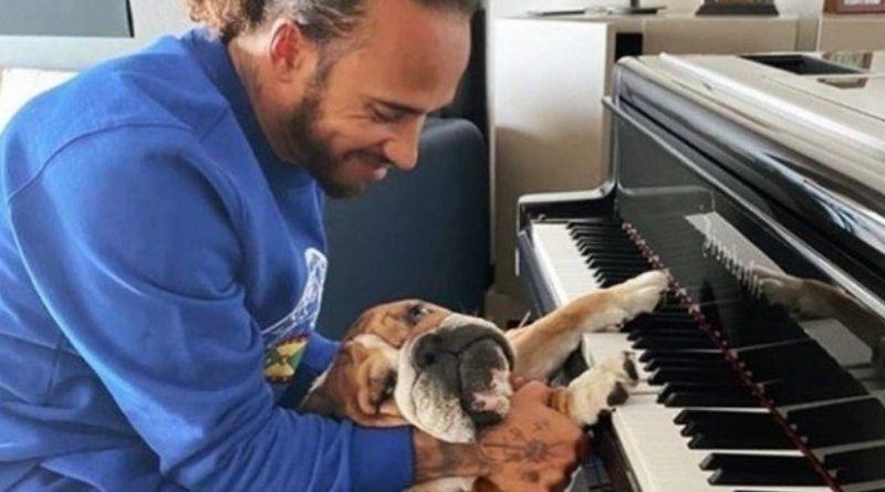 Piloto Lewis Hamilton tem cachorro vegano
