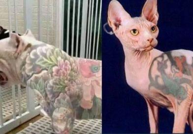 Lei proíbe tatuagens em animais