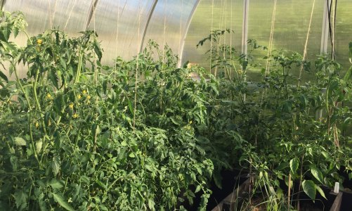 My new Polytunnel Greenhouse – Palram Bella