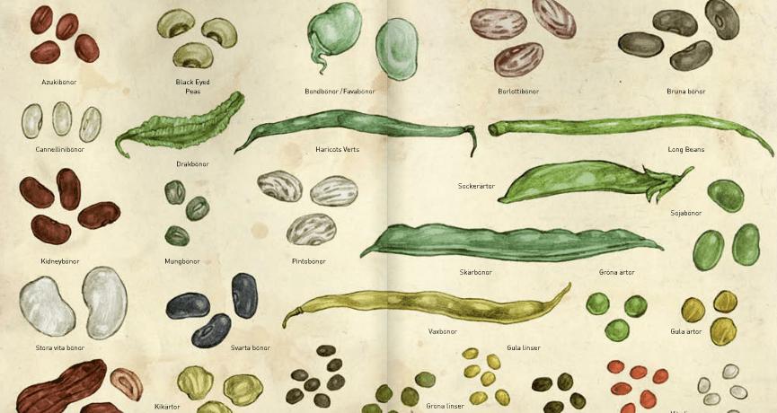 bönor ärtor och linser