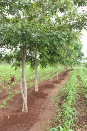 Plantering Plan Vivo
