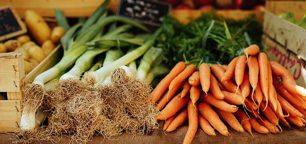 Purjolök och morötter på rad