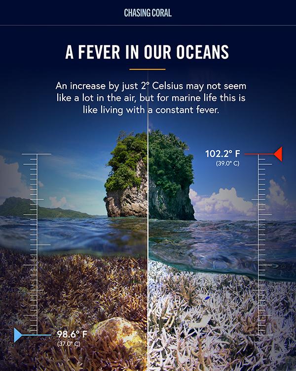 En bild där ena halvan visar levande havsmiljö och den andra samma vy men död