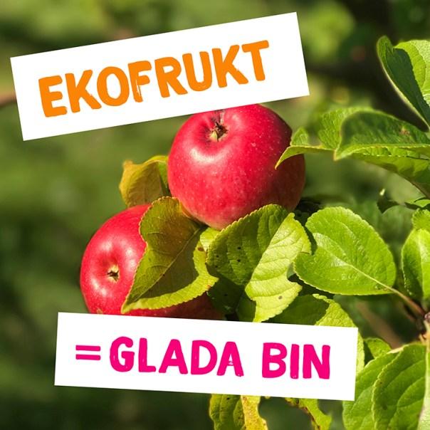 """Äpplen i äppelträd med texten """"Ekofrukt = glada bin"""" på"""