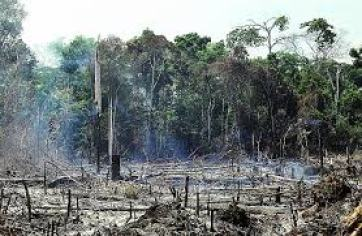 Rainforest deforestation
