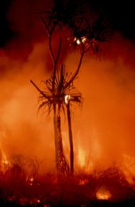Fire_at_the_Top_End_of_Australia