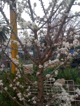 Spring blossoms at Veg Out...