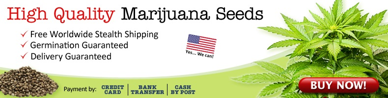 Legally Buy Marijuana Seeds In New York