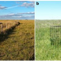 Plant quality and primary productivity modulate plant biomass responses to the joint effects of grazing and fertilization in a mesic grassland