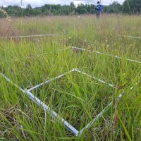 New insights into small-scale species-area relationships and beta diversity due to the GrassPlot database