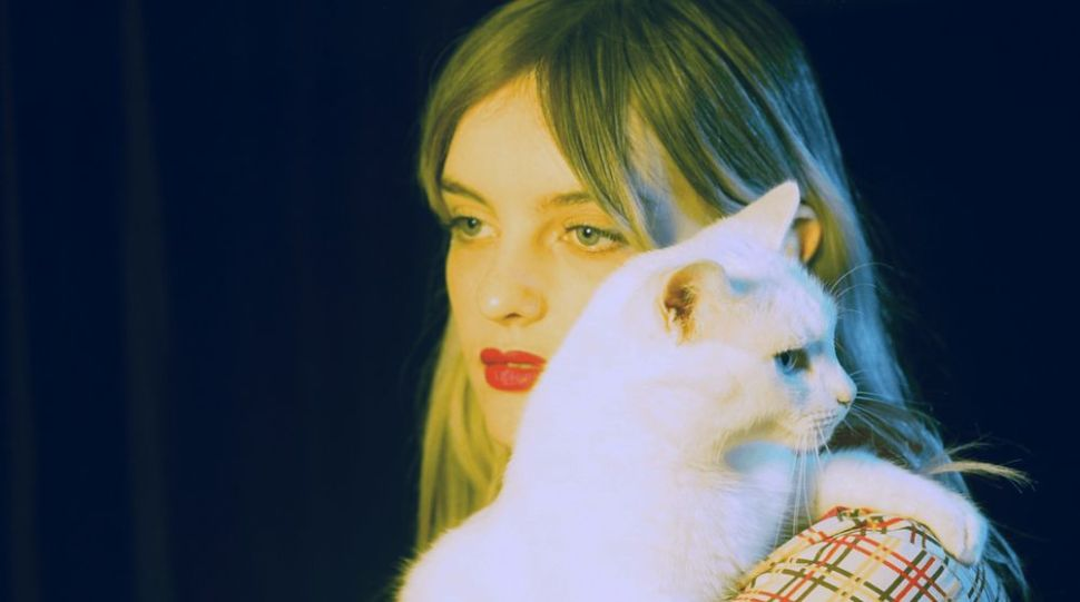 hayley-stewart-cat