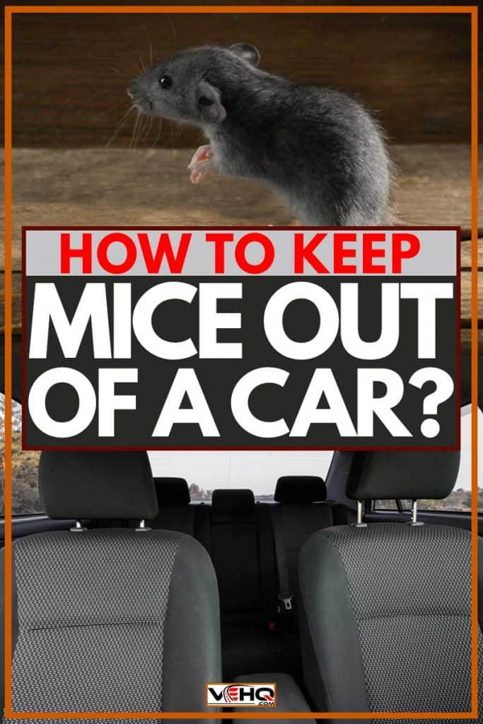 How to Keep Mice Out of a Car? – Vehicle HQ
