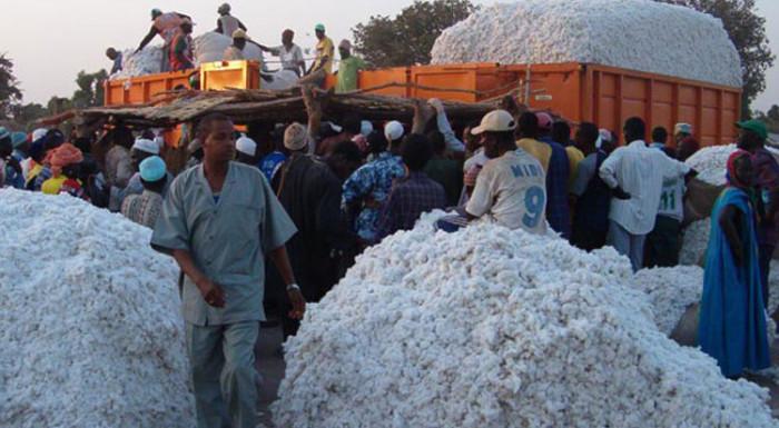 Cameroun : Les bons comptes de la Sodecoton – Financial Afrik