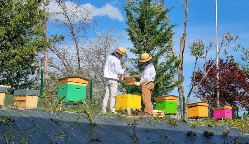 La nouvelle tendance RSE : installer des ruches dans son entreprise !   Le courrier des entreprises – Le Courrier des Entreprises