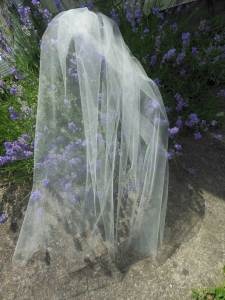 short sheer bridal veil
