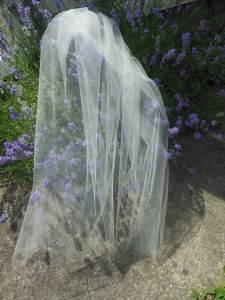 short sheer bridal veil