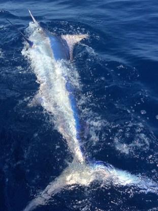 costarica-zancudo-lodge-marlin_038