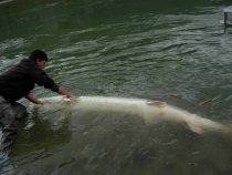 sturgeon-fishing-167