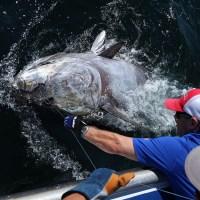 О Канада. О Канада. И голубой тунец!