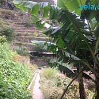 Wegen Ophelia zu Levada-Wanderungen gezwungen