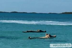 Les cochons qui nagent de Big Major Spot, Exumas, Bahamas