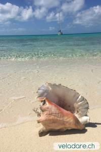 notre voilier vela dare à Flamingo Cays, Bahamas
