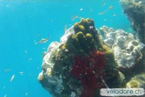Unterwasserwelt, Lemmon Cays, San Blas, Panama