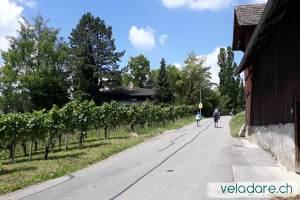 Weinwanderweg Weinfelden
