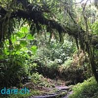 Panama: Boquete und El Valle de Anton