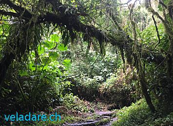 Cloud forest, Boquete, Panama