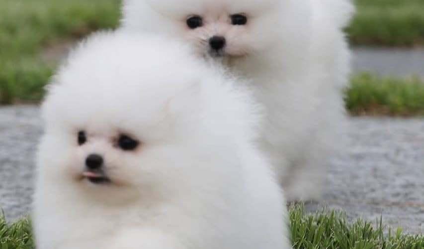 Kumpulan Foto Anjing Lucu dan Menggemaskan
