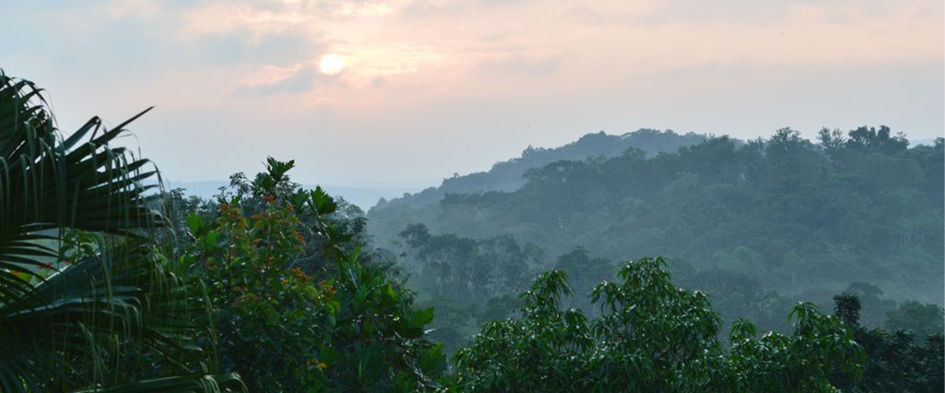 Adventure & Tranquility in the Rainforest