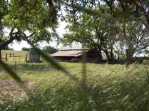 old barn on the east side